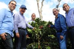 (Video) Danilo en Rancho Arriba, San José de Ocoa, en proyecto de Induban reforestando con café