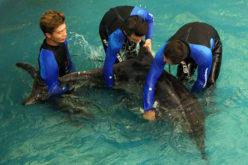 Rescataron el delfín y dieron rienda suelta a su libertad