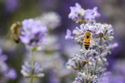 La abeja reina tiene excepcional memoria y grandes habilidades para el aprendizaje