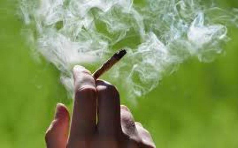 (Video) Los que gustan de la marihuana juran que no; la siquiatra asegura que sí afecta la salud de quienes la consumen
