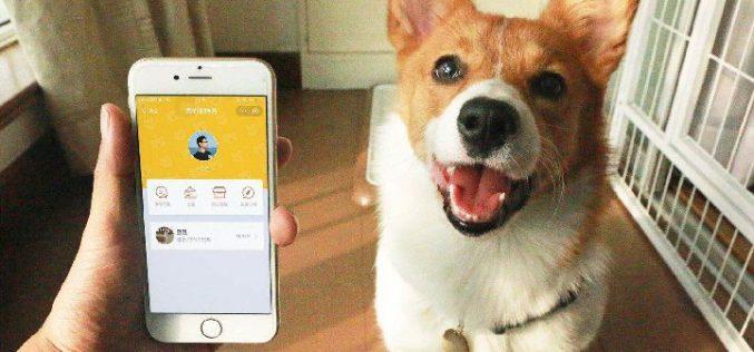 Su mascota perdida puede retornar a casa, con un nuevo sistema que se implementa en China con el celular