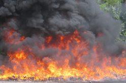 Procuraduría General de la República quema más de 350 kilogramos de drogas; el 81.59 % era marihuana