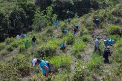 Empleados Grupo Popular siembran más de 52 mil árboles en cuenca alta del río Ozama en colaboración con el Fondo del Agua de SD