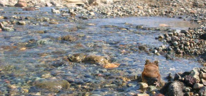 De cómo asesinaron en Bonao el río Masipedro… Y el Yuna…