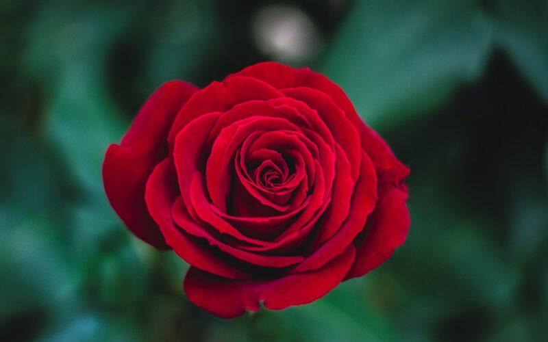 No te vayas del jardín de la vida sin llevarte una flor